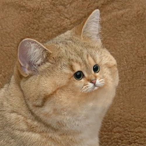 Tiny Face Cat Cat with...