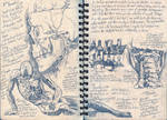 Visual Journal: Anatomy