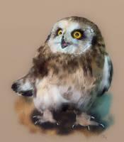 Tiny owl by SleepySleepyOwl