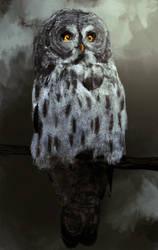 Great grey owl by SleepySleepyOwl