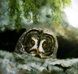 Curious Great Grey Owl by SleepySleepyOwl