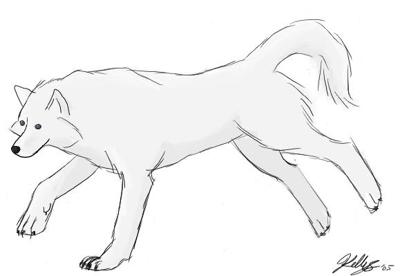 White Wolf by Lunarfish
