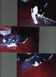 BUBBLE CAT ADVENTURES by kattlegnat