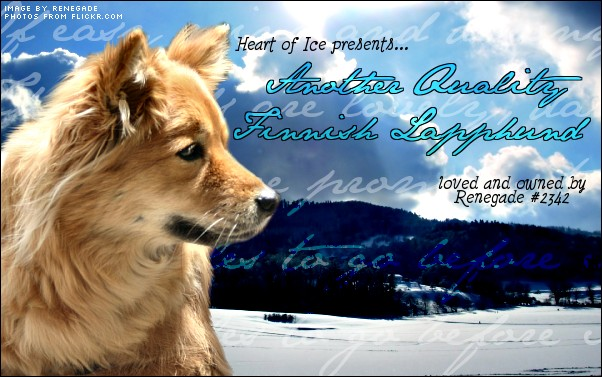 Finnish Lapphund By Dogexpert On Deviantart | Dog Breeds Picture