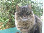 Pretty Cat 8