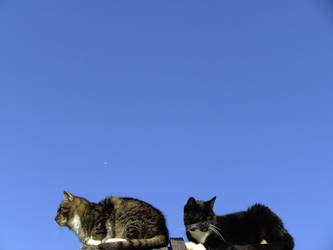 Two Cats And The Wide Open Space by xXseadragonXx