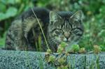 The Cat in the garden 3.