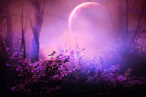 secret forest by beyzayildirim77