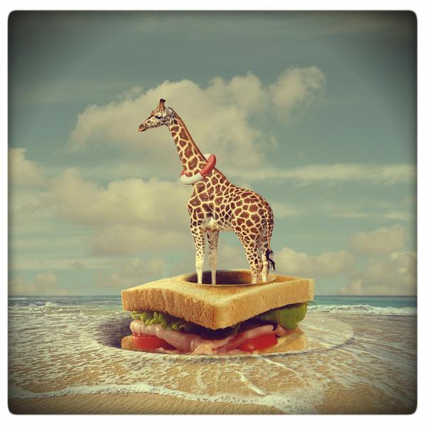 sandwich nest by beyzayildirim77