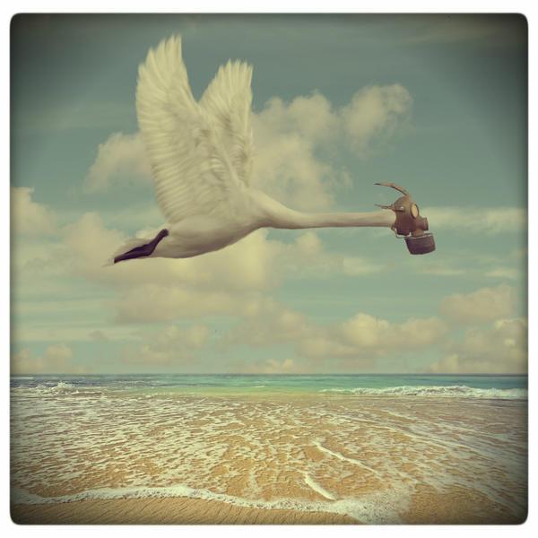 last swan by beyzayildirim77