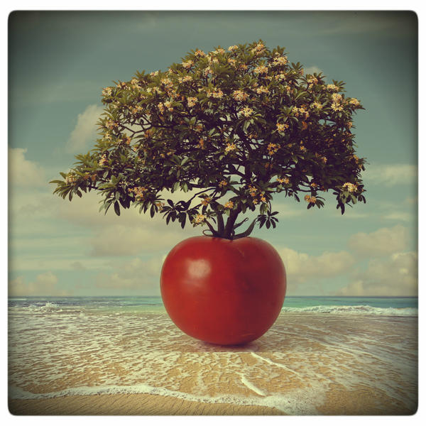 Tomato tree by beyzayildirim77