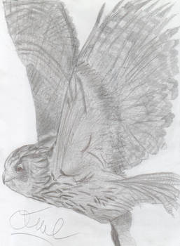 Uhu Owl Pencil Sketch
