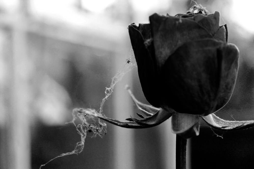 sweet dreams by JadeGreenbrooke
