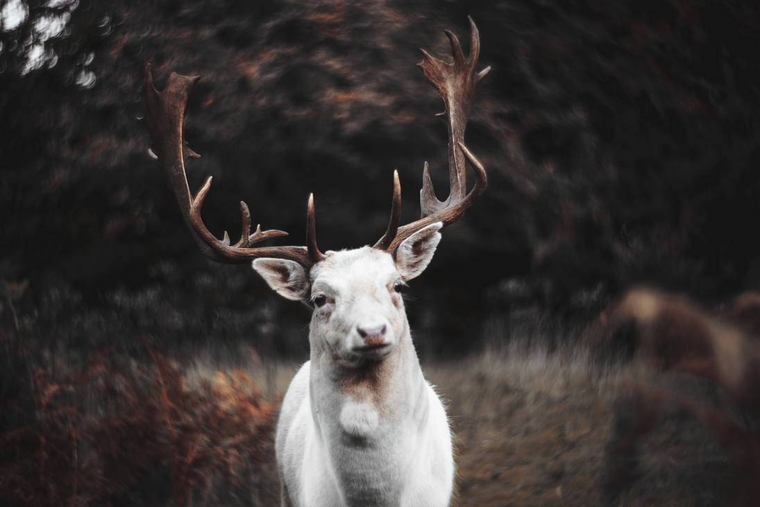 The White Stag by JadeGreenbrooke