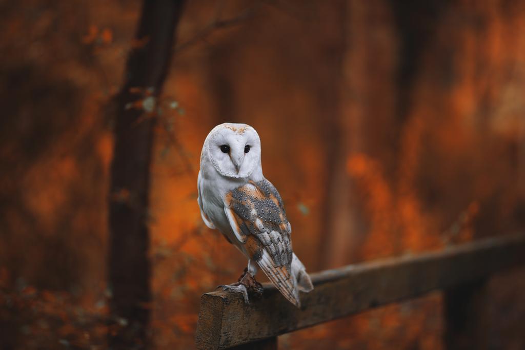 Dizzy the Owl. by JadeGreenbrooke
