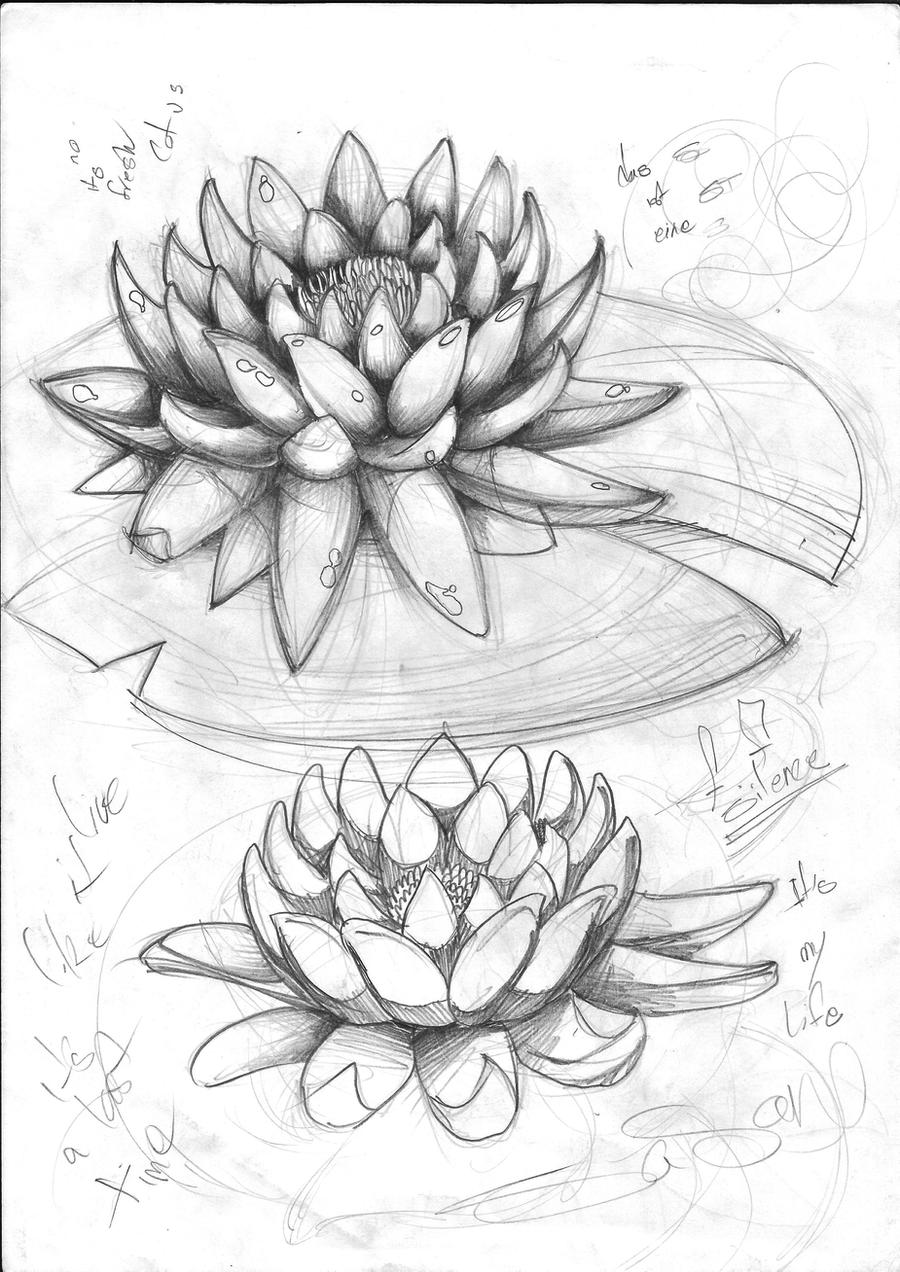lotus sketch by sasan-ghods on DeviantArt