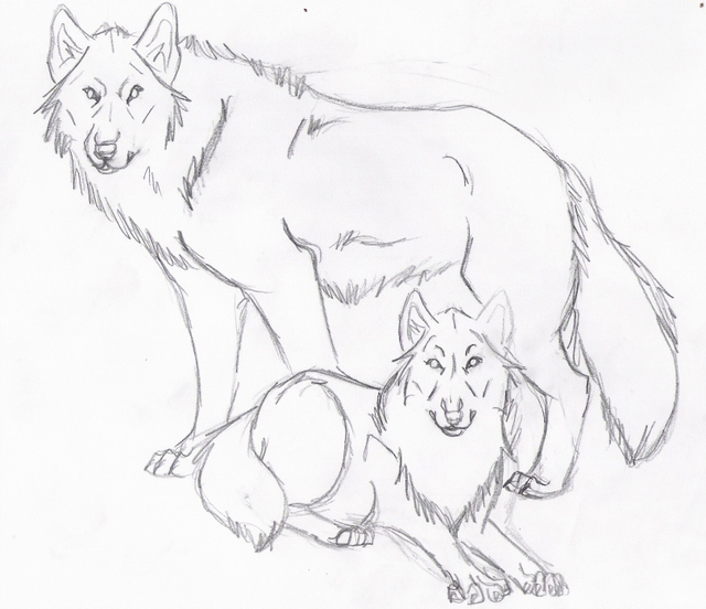 Realistic Wolf Sketch ...