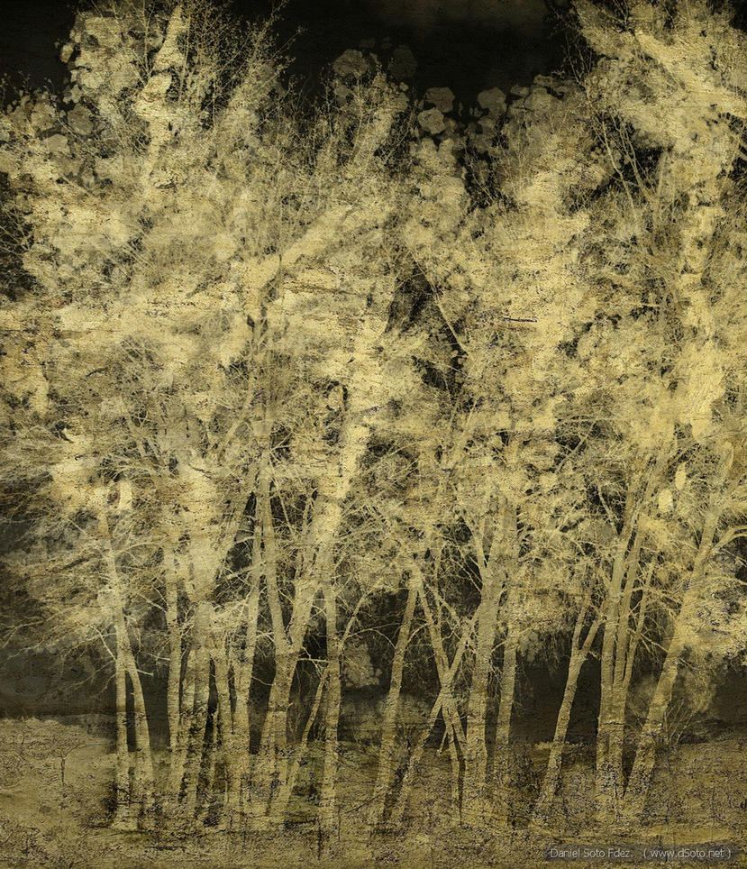 Golden forest by dSoto-Studio