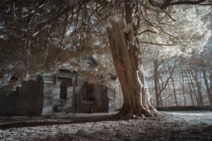 Churchyard Tree by richsabre