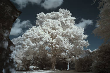 Summer Tree IR by richsabre