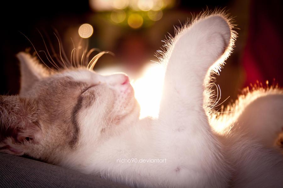 ..fluffy by Nicho90