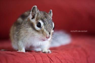 Cute squirrel by Nicho90