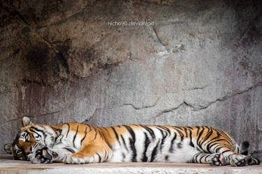 Relax Tiger by Nicho90