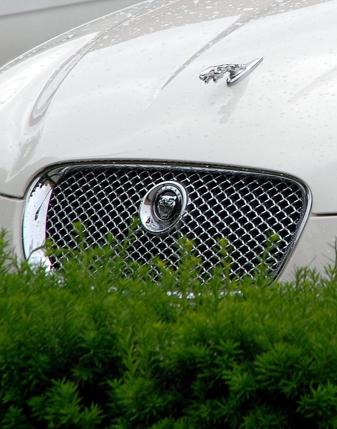 White Jaguar by Anntylus