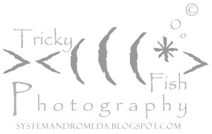 TrickyFishPhotograph's Profile Picture