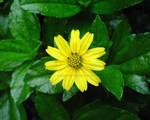 Flower in da IPB part 1 by adewo