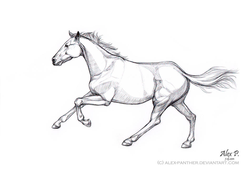 Panther Head Drawing furthermore A Sketch Of Galloping Horse 447967838 in addition Big Cat Coloring Pages in addition Deer besides How To Draw Panthers  Black Panthers Drawing Sheet. on wild black panthers