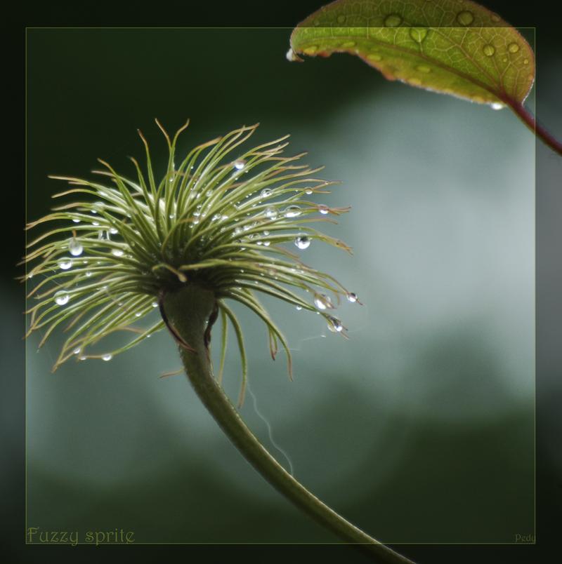 Fuzzy sprite by P3dy