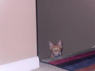 Stealthy Watchful Kitten