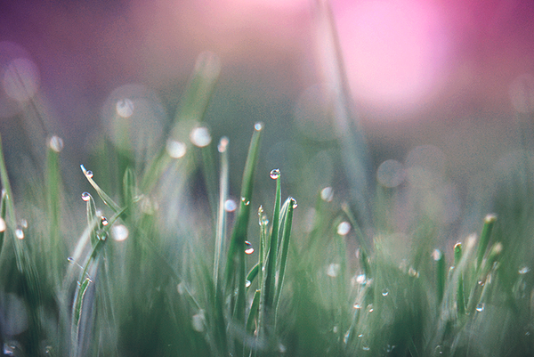 Evening dew by Symphonyy3