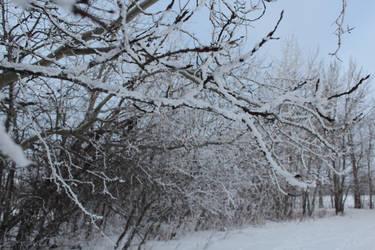 u-um snowbranches? XD by Coda01