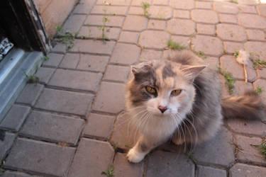 old cat.. by Coda01