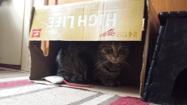 She loves boxes