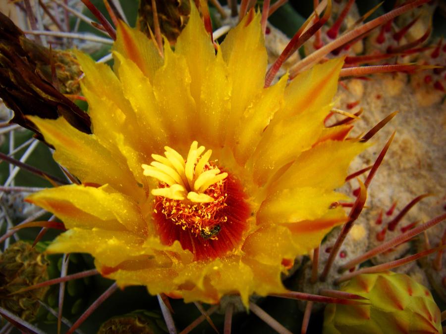 Beutifull flower of desert by happyfacekiller88