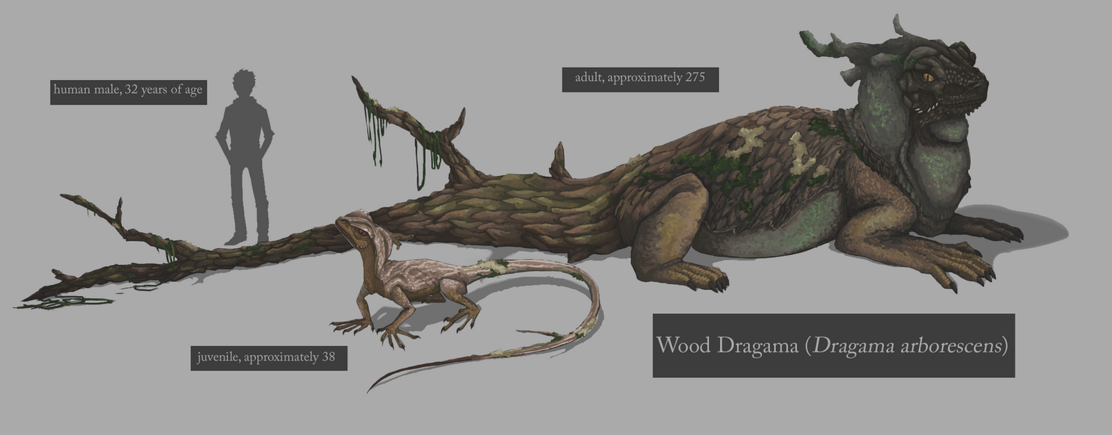 Wood Dragama by akvz