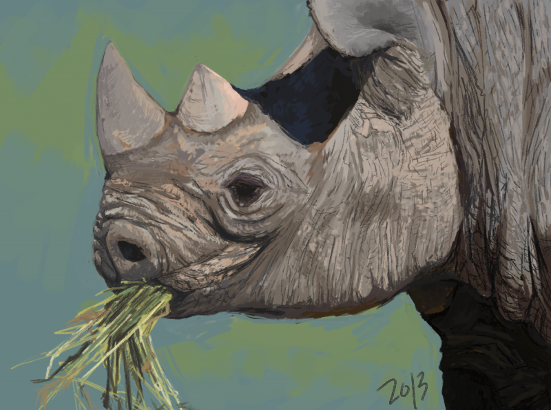 World Rhino Day by akvz