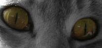 Cat's Eyes by Ayla-the-Raichu