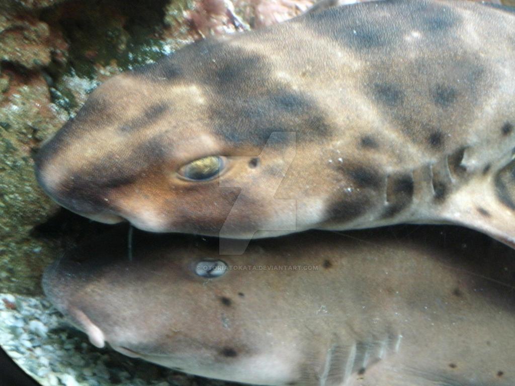 Sharkpile by OtoriAtokata