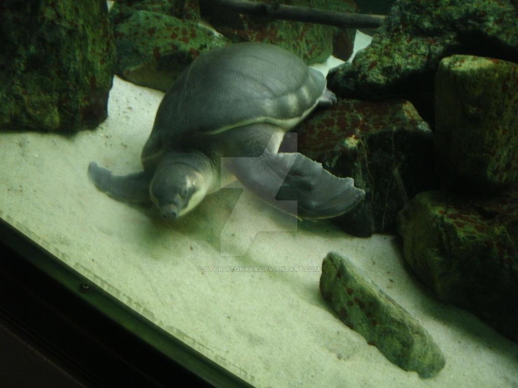This turtle is broken. by OtoriAtokata