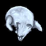 White Fox Pelt by Ulfrheim