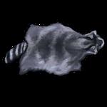 Raccoon Pelt by Ulfrheim