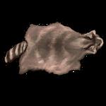 Cream Raccoon Pelt by Ulfrheim