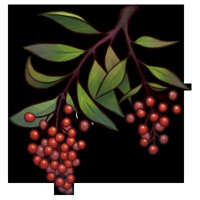 Crabapple Berries