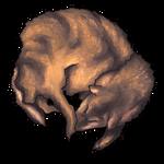 Tawny Coyote Pelt by Ulfrheim
