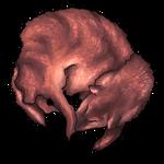 Red Coyote Pelt by Ulfrheim