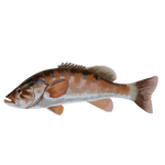 Smallmouth Bass by Ulfrheim
